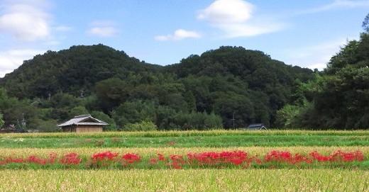 ゆっくりハイク 丹生山