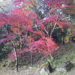 木見駅側の下山口の紅葉