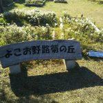 野路菊の丘