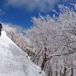 冬のさくら(?)