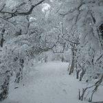 見事な樹氷のトンネル