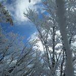 空の青、雲の白そして霧氷