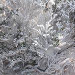 ガラス細工のような雪の花