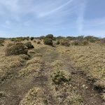 フトウガ峰から段ヶ峰への馬酔木道