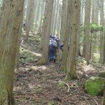 杉の木の間を登ります