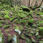 苔むした岩が織りなす日本の美