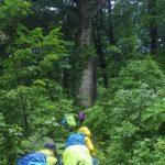 巨木の森に入りました