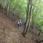 始めはなだらかな森林の中の道