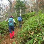 ダケカンバと笹の登山道